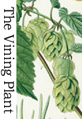 The vining plant