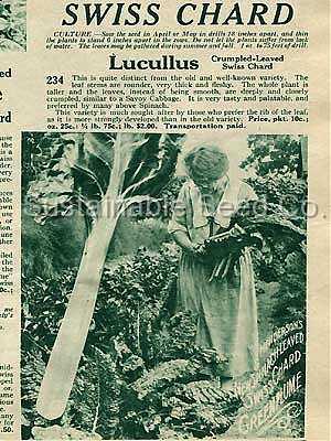 140101 lucillus swiss chard