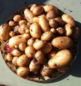 One pot harvest nikki and rocket