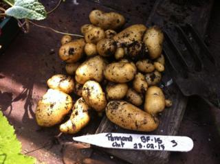 Harvest bf15 2013
