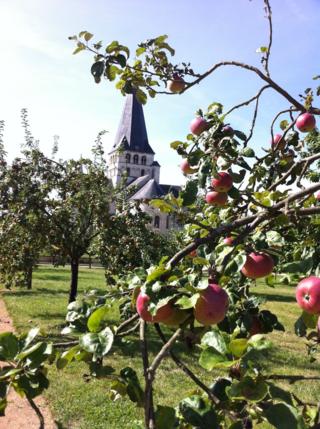 Orchard nice shot