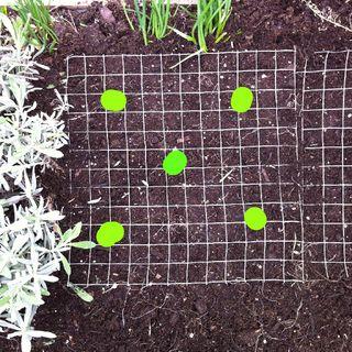 140411 planting on a grid copy